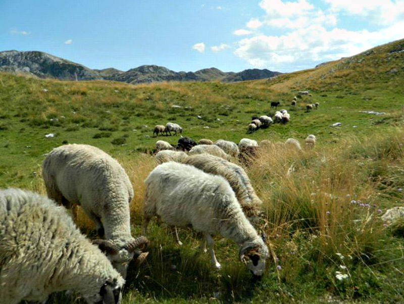 Experts testing endemic plants on Durmitor